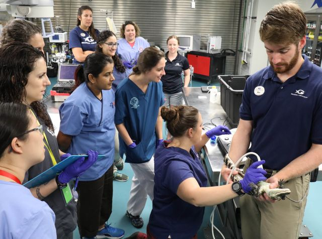 AQUAVET® Students Participate in Fish and Reptile Exams at Georgia Aquarium