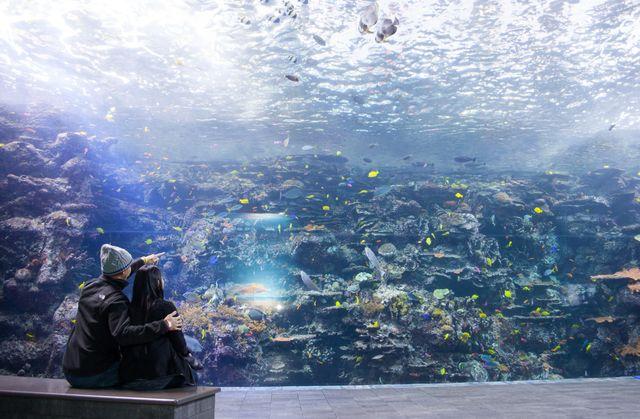 Enjoy An Adults-Only Nightlife Event at Georgia Aquarium's SeaNights