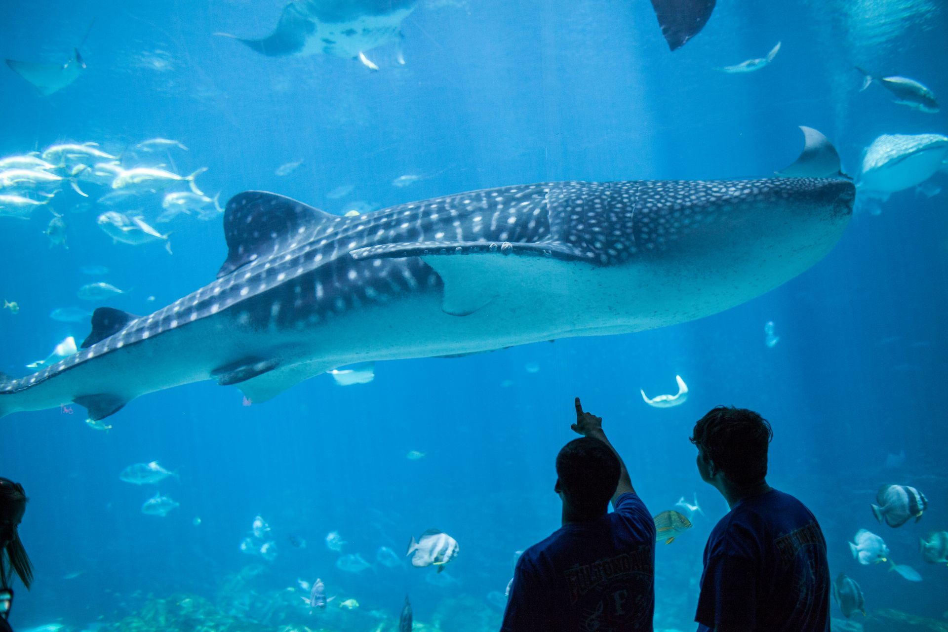Big Fish, Big Celebration: Georgia Aquarium Hosts Whale ...