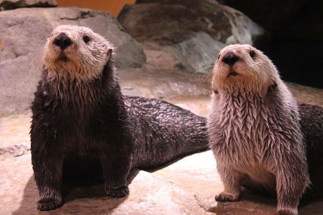 You Otter Know!