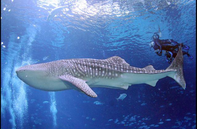 Journey with Gentle Giants - Swim