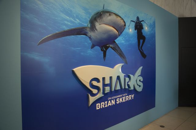 Georgia Aquarium to Host 'SHARKS: On Assignment with Brian Skerry' Exhibition