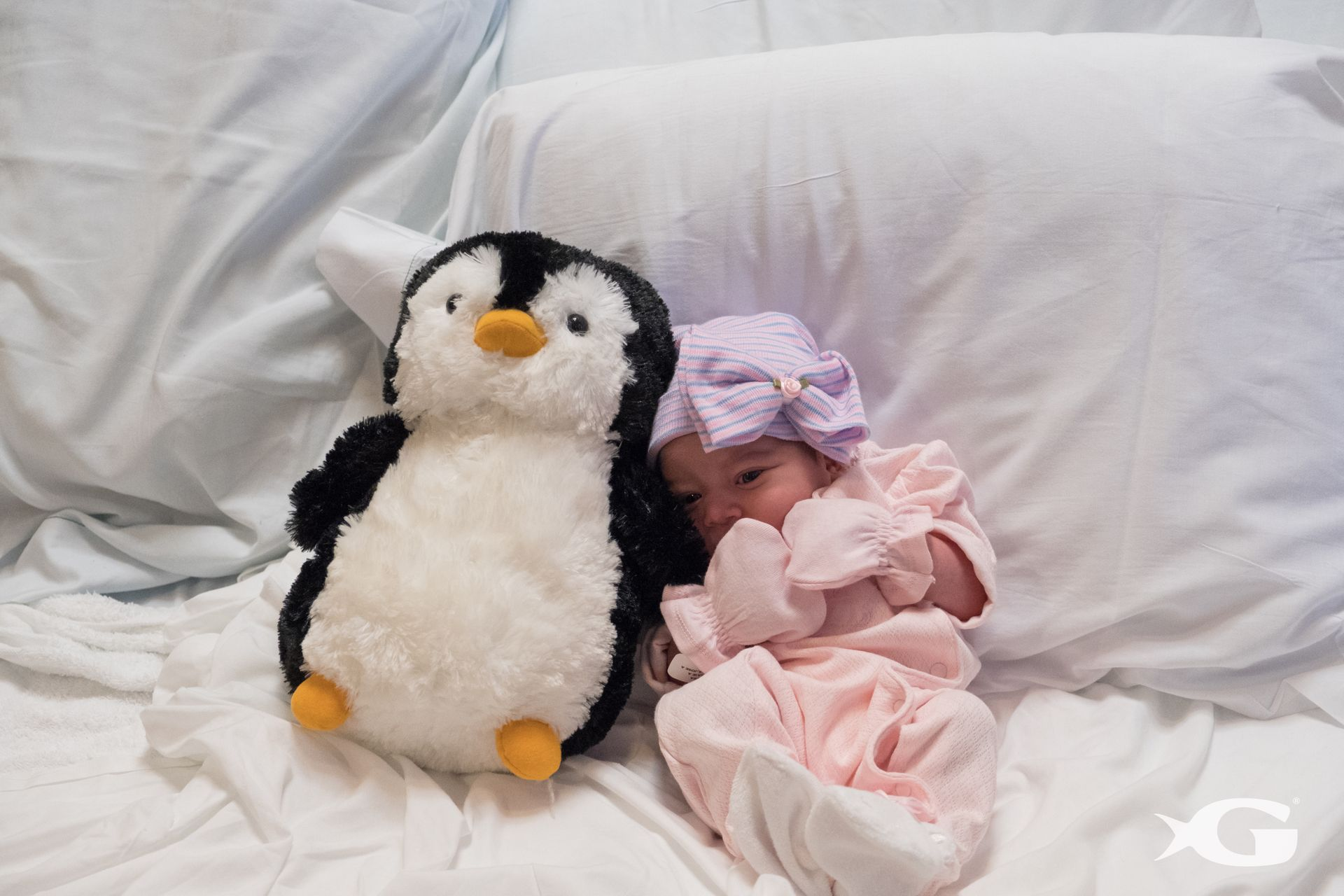 Newborn and Penguin 1
