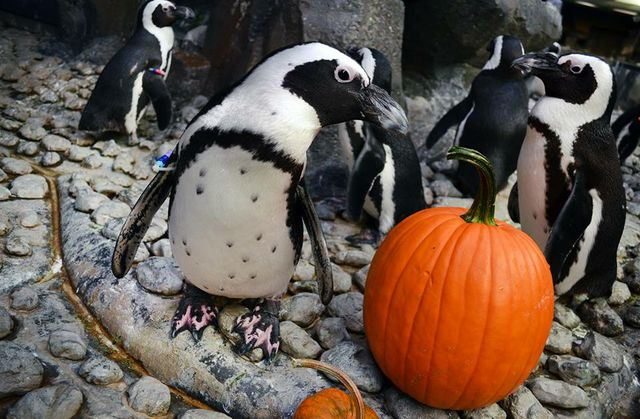 Fall in to the Season with Aquarium Fun