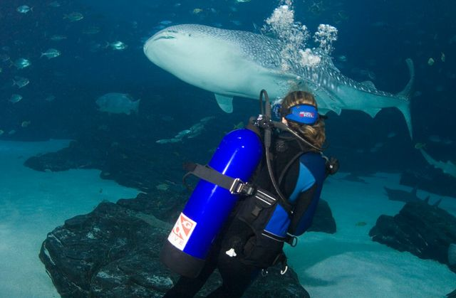 Diver with whale shark_preview