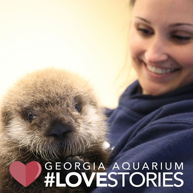 Georgia Aquarium Premieres New Facebook Watch Series: Aquarium Love Stories