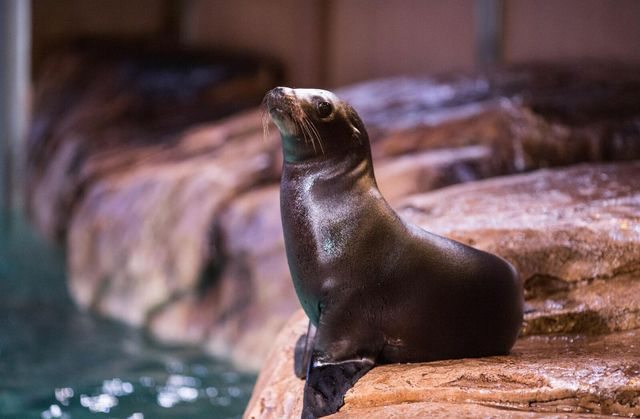 Hello, World! Scarlett the Sea Lion Pup Now In SunTrust Pier 225