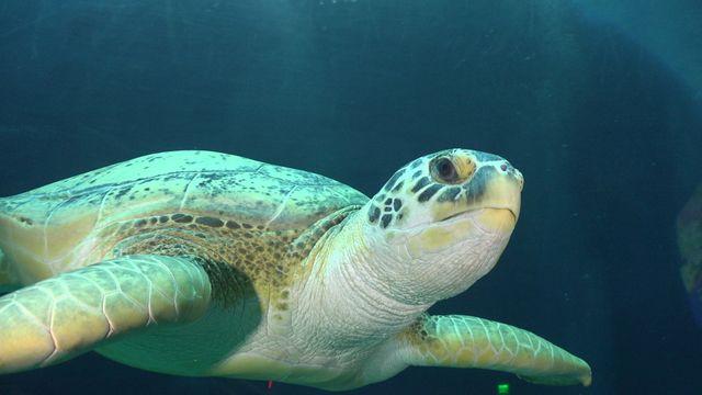 Sprint into Summer with Georgia Aquarium's Inaugural Turtle Trot!
