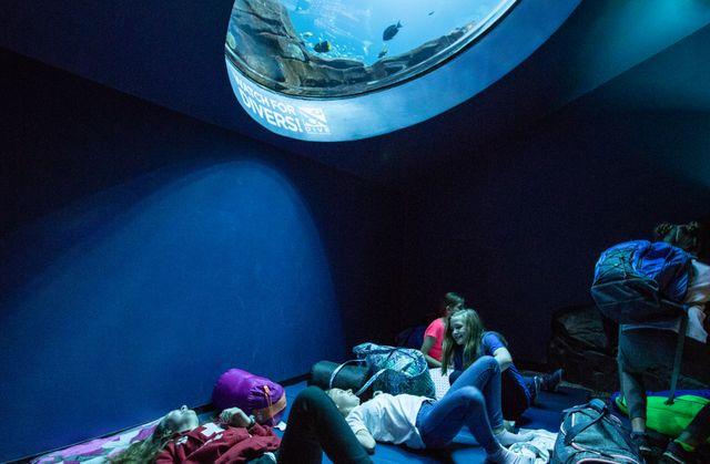 Sleep Under the Sea 5