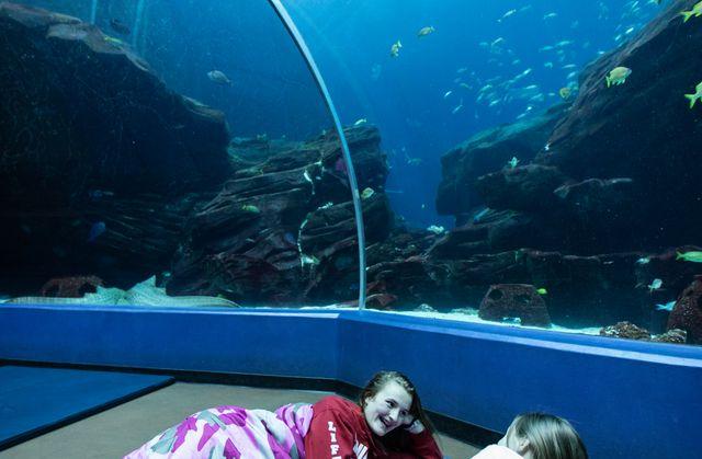 Sleep Under the Sea 2