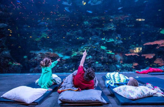 Sleep Under the Sea 1