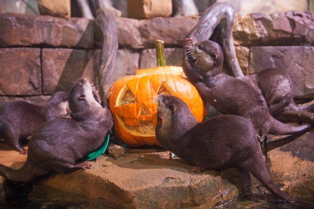 FLIP into Fall at Georgia Aquarium