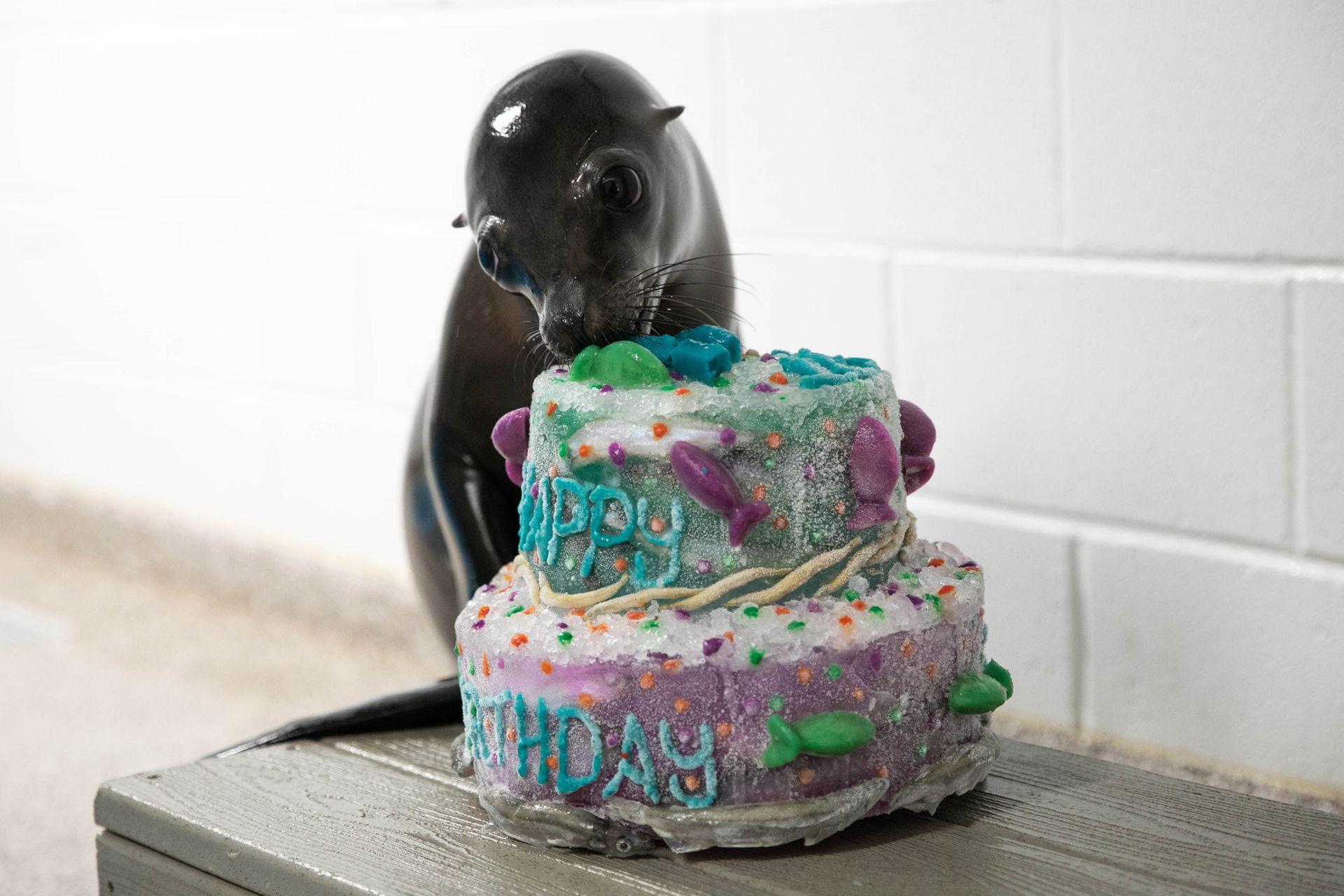 Phenomenal Wheres The Cake Someones Turning 1 Georgia Aquarium Funny Birthday Cards Online Necthendildamsfinfo
