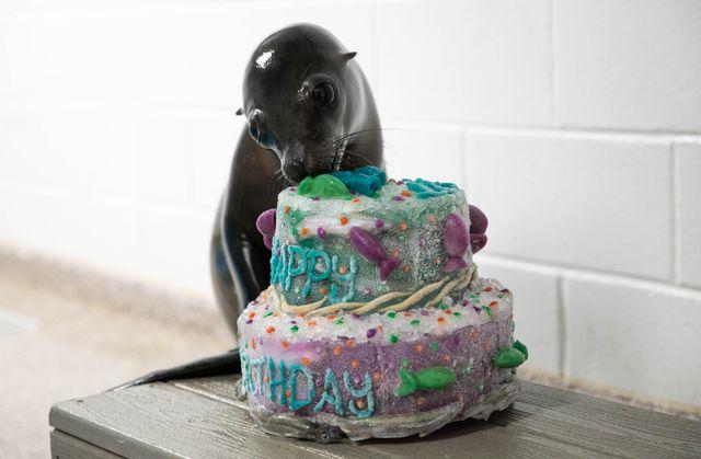 Where's the Cake? Someone's Turning 1!