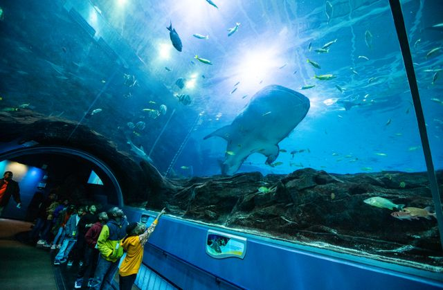 Give the Gift of Georgia Aquarium This Holiday Season