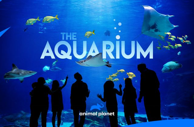 "All-New Series ""The Aquarium"" Takes Audiences Behind The Scenes at the Georgia Aquarium Beginning May 19"