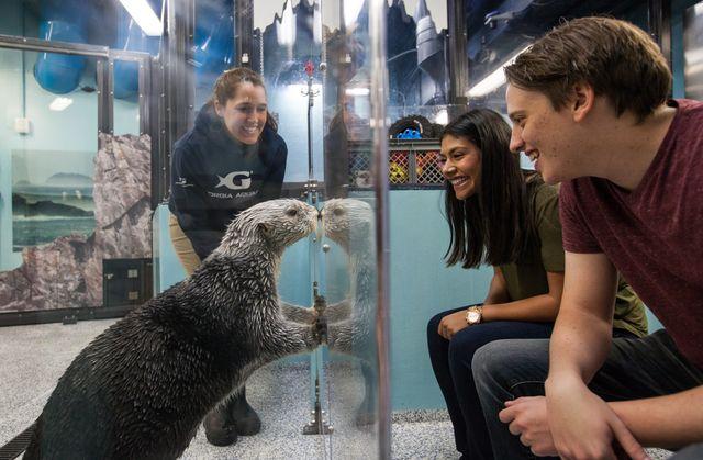 Sea-Otter-Encounter-93
