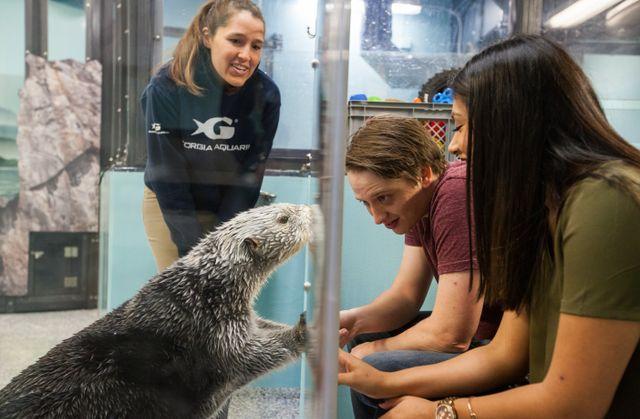 Sea-Otter-Encounter-186