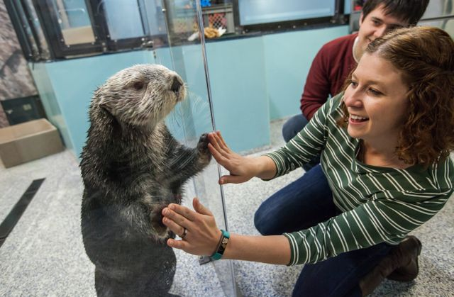 Sea-Otter-Encounter-222