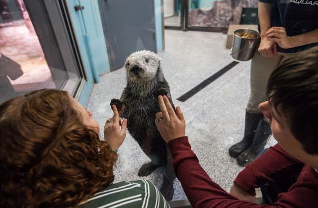 Sea Otter Encounter