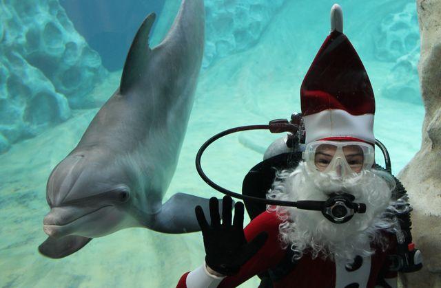 Dolphin SCUBA CLaus Standing TIGHT