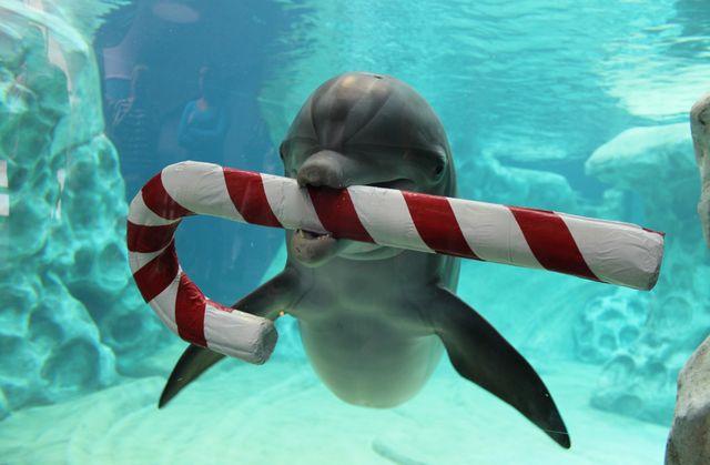 Dolphin_Holiday