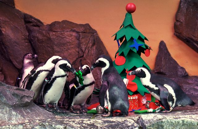 Penguins_Holiday 1