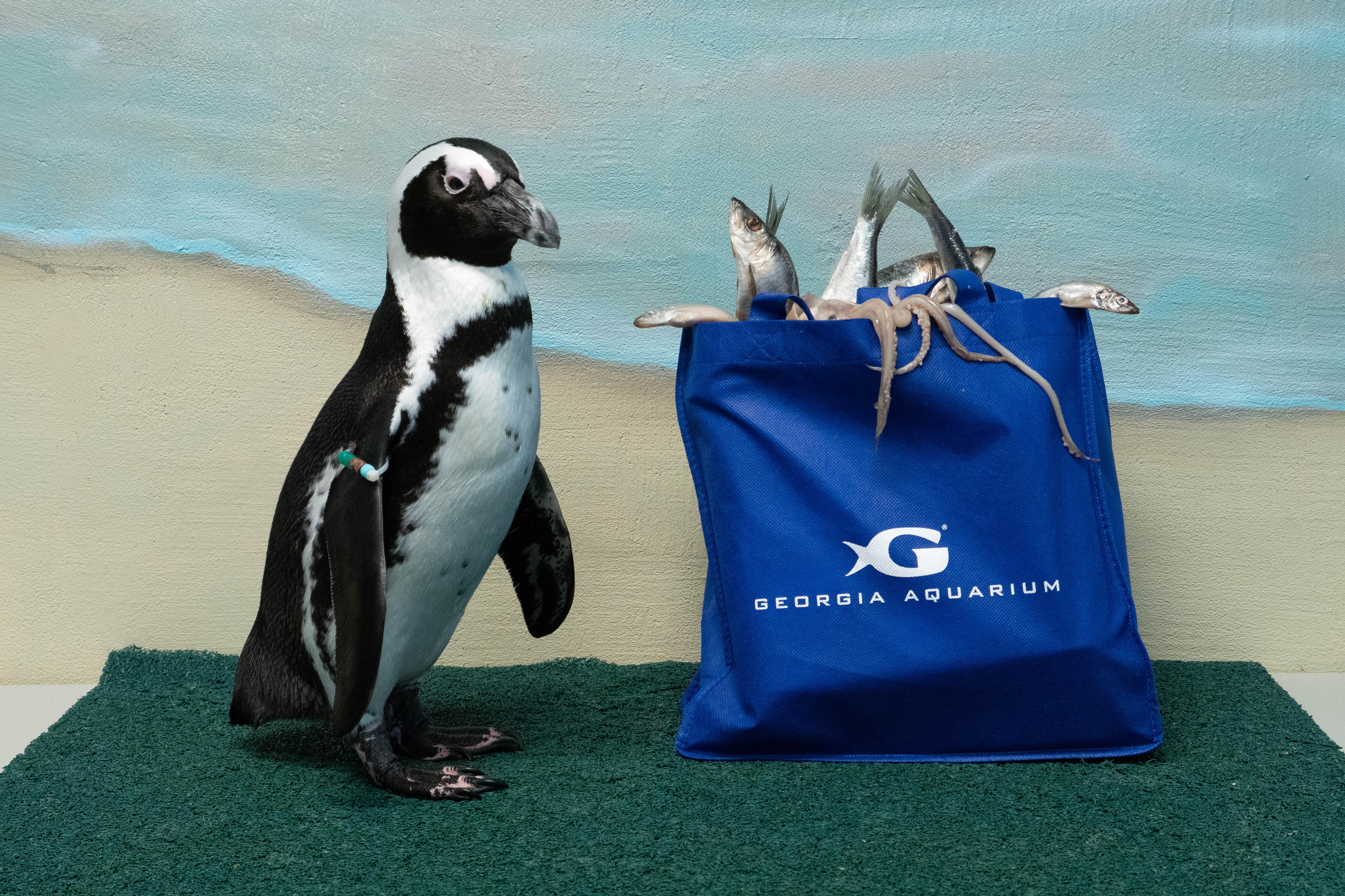 Reusable Bag - Penguin-2