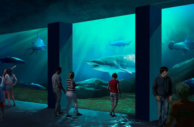 Expansion 2020 Animal Gallery 2