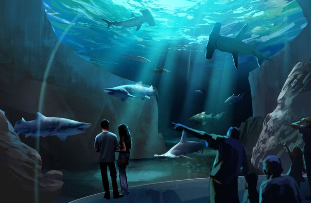 Expansion 2020 Animal Gallery 6
