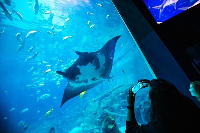 The Instagrammer's Guide to Georgia Aquarium