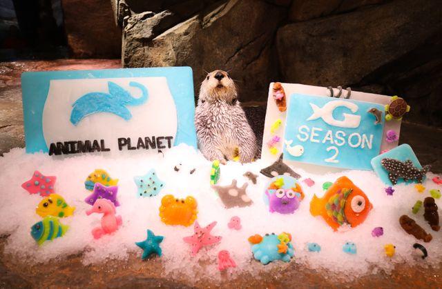"Animal Planet Greenlights Second Season of ""The Aquarium"""