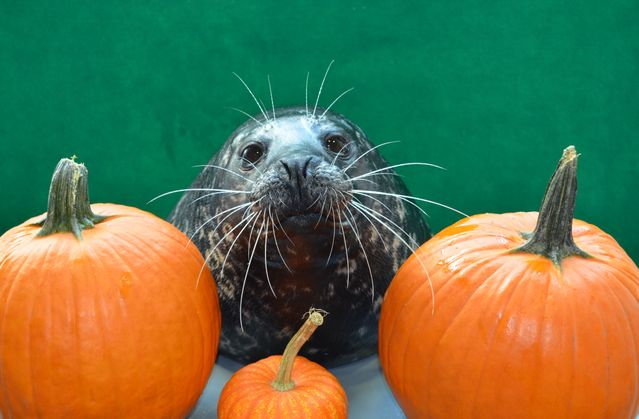You Really Autumn Know About All The Cool Events Happening At The Aquarium This Fall!