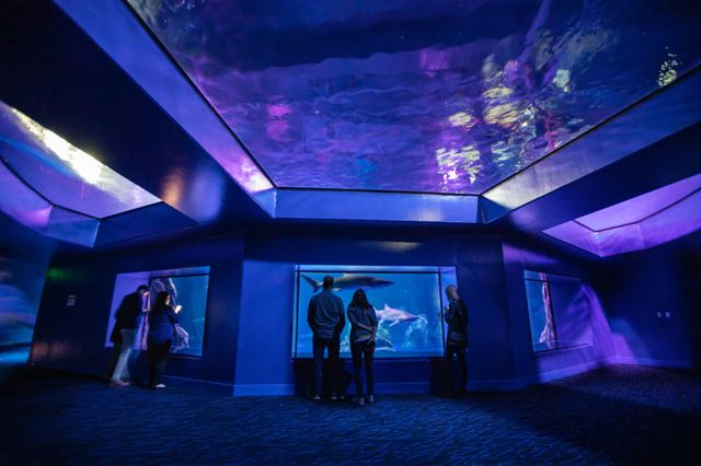 Georgia Aquarium's 2020 Holiday Gift Guide