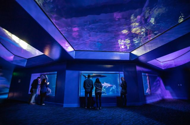 Georgia Aquarium's 2020 Holiday Gift Guide