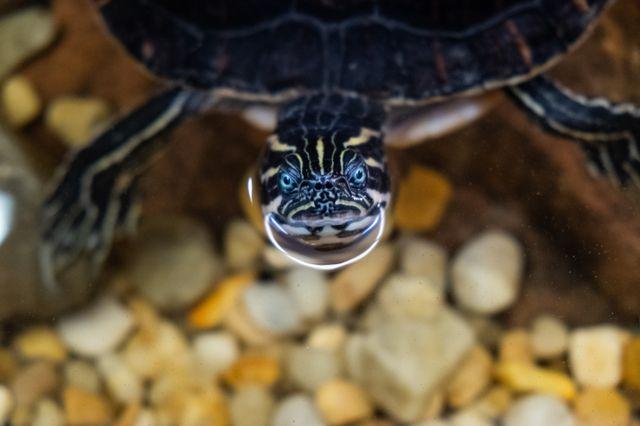 Local Elementary School Turtle Pond Renovated with Georgia Aquarium Help