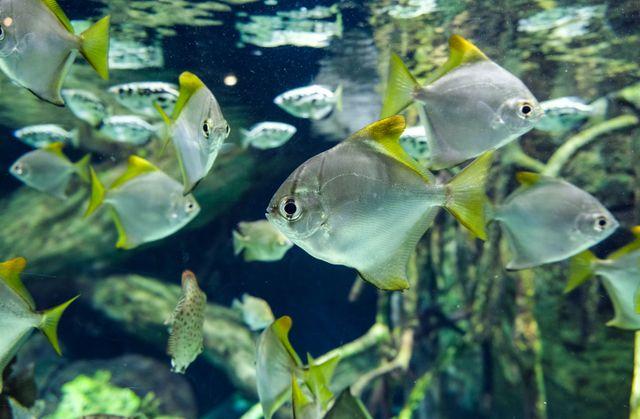 Georgia Aquarium Fish School Project