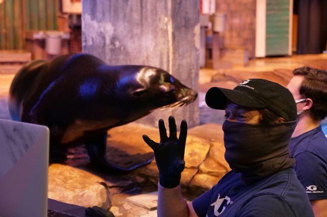 Georgia Aquarium and Make-A-Wish Georgia Grant Kids a Virtual Visit