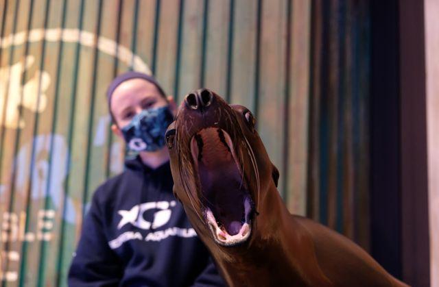 Georgia Aquarium Nominated for Best Aquarium in USA Today 10Best Reader's Choice Travel Awards