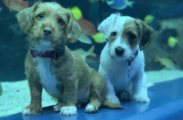 AHS Puppies B-Roll