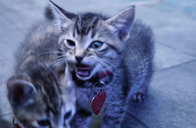 AHS Kittens B-Roll