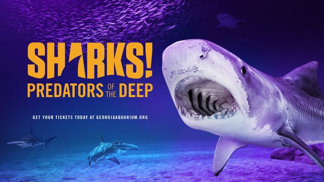 'SHARKS!' Has Surfaced at Georgia Aquarium