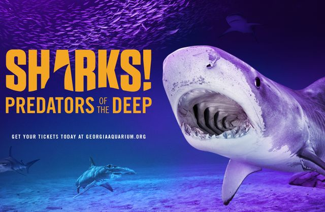 'SHARKS!' Has Surfaced at Georgia Aquarium