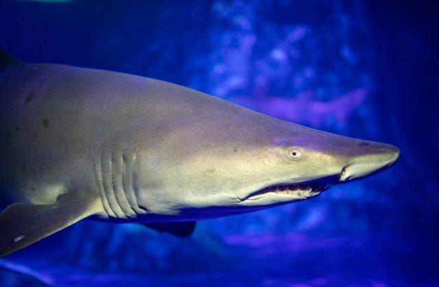 SHARKS! Announcement Video