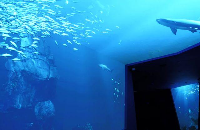 SHARKS! Predators of the Deep B-Roll