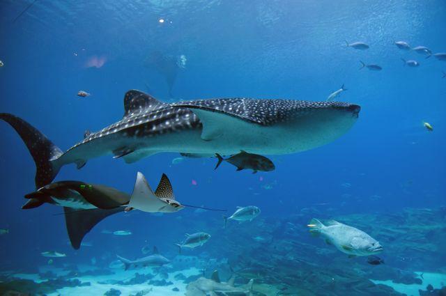 Georgia Aquarium's Largest Animal Ambassadors