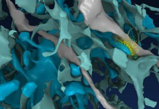 Dim Bulb, Bright Mind: GPUs Help Reveal Brain's Vast Memory Store, Using Trickle of Energy