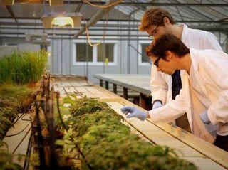 Digital Green Thumb: How AI Helps Farmers Combat Plant Disease