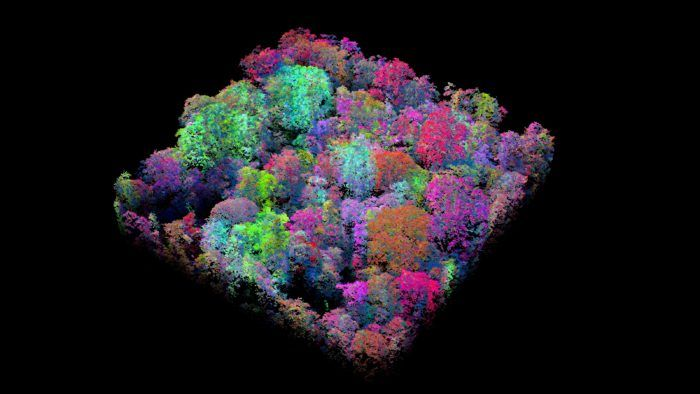 Tree's Company: AI Maps Biological Riches of the Rainforest