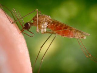 anopheles-gambiae-mosquito-cdc-malaria-842x450